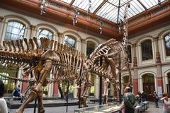 Das Museum der Naturgeschichte - Berlin lizenzfreie stockbilder