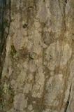 Das Muster der Baumrinde Hintergrund Schöne Beschaffenheit Stockbild