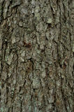 Das Muster der Baumrinde Hintergrund Schöne Beschaffenheit Lizenzfreie Stockfotos
