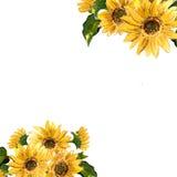 Das Muster der blühenden gelben Blumensonnenblume gemalt im Aquarell Stockbilder