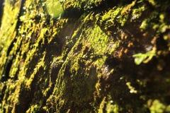 Das Muster der Natur lizenzfreie stockfotos