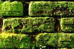 Das Muster der Natur Stockbilder