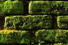 Das Muster der Natur stockfotografie