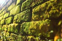 Das Muster der Natur Lizenzfreie Stockfotografie