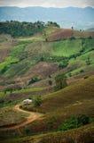 Das Muster der Natur auf dem Hügel stockbild