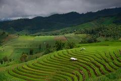 Das Muster des grünen terassenförmig angelegten Reis-Feldes stockbild