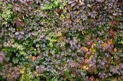 Das Muster des Herbstlaubs Lizenzfreie Stockbilder