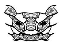 Das Muster von räuberischen Geschöpfen vektor abbildung