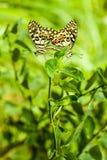 Das natürliche der Liebe in der Natur Stockfoto