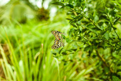 Das natürliche der Liebe in der Natur Lizenzfreies Stockfoto