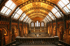 Das Naturgeschichte-Museum lizenzfreies stockbild