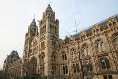 Das Naturgeschichte-Museum lizenzfreie stockbilder