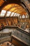 Das Naturgeschichte-Museum lizenzfreies stockfoto