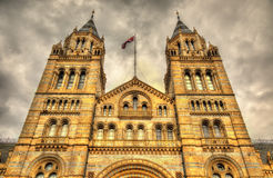 Das Naturgeschichte-Museum in London Stockbild