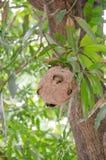 Das Nest der Hornisse stockfoto