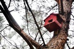Das Nest des Vogels auf Baum lizenzfreies stockfoto