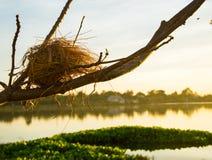 Das Nest des Vogels auf dem Baum Stockbild