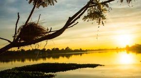 Das Nest des Vogels auf dem Baum Lizenzfreie Stockfotografie