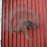 Das Nest des Vogels in der Fischfalle Stockfoto
