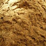 Das Nest-Detail der Wespe lizenzfreies stockbild