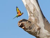 Das Nest heraus überprüfen Lizenzfreies Stockbild