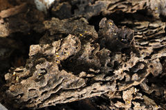 Das Nest von Termiten Stockfotografie