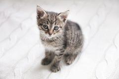 Das nette Kätzchen der getigerten Katze, das auf Weiß sitzt, strickte Hintergrund Lizenzfreies Stockbild