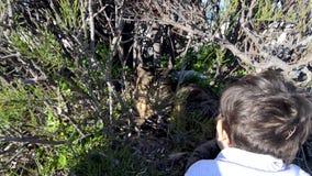 Das nette Kleinkind, das zu einer Katze wellenartig bewegt, hiden im Busch stock footage