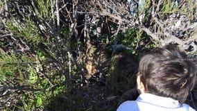 Das nette Kleinkind, das zu einer Katze wellenartig bewegt, hiden im Busch stock video footage