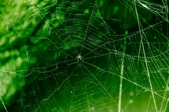 Das Netz der Spinne auf Grün Stockbilder