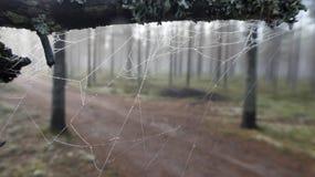 Das Netz im Wald Lizenzfreie Stockbilder