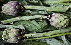 Das neue grüne geschmackvolle gekochte artichok bereitete sich für das Kochen, horizont vor stockfotografie