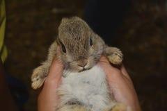 Das neugeborene Kaninchen Stockbilder