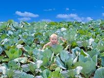 Das neugeborene Kind gefunden im Kohl Lizenzfreie Stockfotos