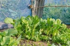 Das organische Gemüse stockfoto