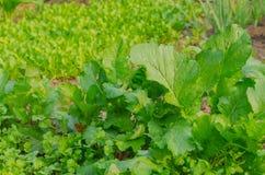 Das organische Gemüse stockbild
