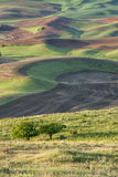 Das Palouse-Ackerland Stockfotos