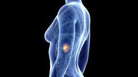 Das Pankreas stock abbildung