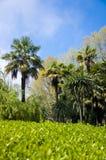Das Parkarboretum Stockfotos