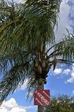 Das Parken singen auf einem Baum Stockbilder