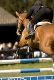 Das Pferd 017 springend Stockfotografie