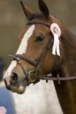 Das Pferd 027 springend Lizenzfreie Stockbilder