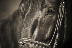 Das Pferd 034 springend Lizenzfreie Stockbilder