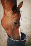 Das Pferd Lizenzfreies Stockfoto