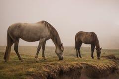 Das Pferd Lizenzfreie Stockfotografie