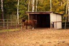 Das Pferd Stockbild