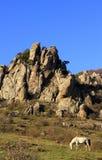 Das Pferd auf dem Hintergrund von Felsen im Sommer Lizenzfreie Stockfotografie