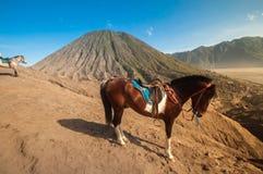Das Pferd in bromo Berg Stockfotografie