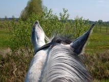 Das Pferd, das nach vorn schaut Stockbilder