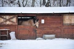 Das Pferd in den Ställen Stockfoto